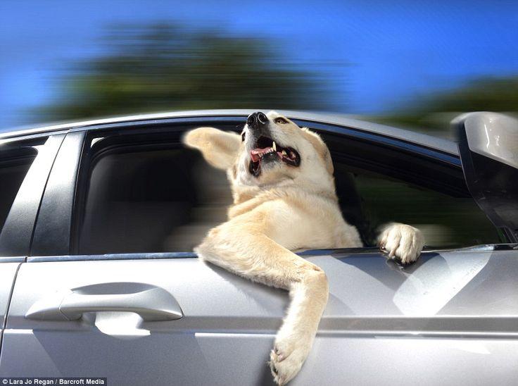 429671b59038cd9b6a07d61da1be4429--photo-series-happy-dogs